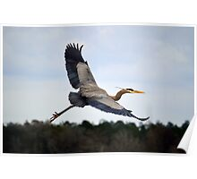 Great Blue Heron Moment In Flight Poster