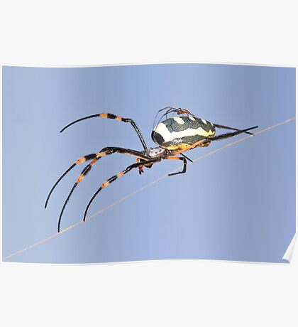 Spider Background - Nature and her Babies of Color and Danger Poster