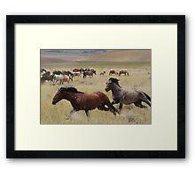 Stallion Chase Framed Print