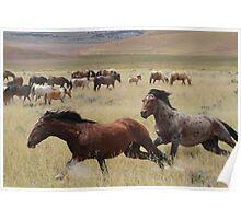 Stallion Chase Poster