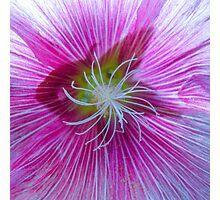 Flower Centre Photographic Print