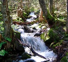 Stream in Balestrand, Norway, Scandinavia. by Kay Cunningham
