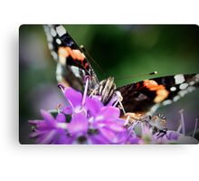 Red Admiral, front view Canvas Print