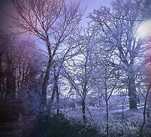 Winter Blue by Sarah Howlett