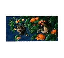 Fruit Bats by cdlillustration