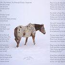 R.I.P. ~ Elijah  3/19/2010 by ChereeCheree