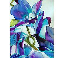 Purple Singapore Orchid watercolour flower Photographic Print