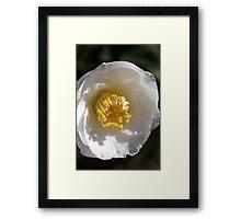 Camellia's Style Framed Print
