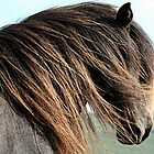 Icelandic Horse Portrait   by Oldetimemercan