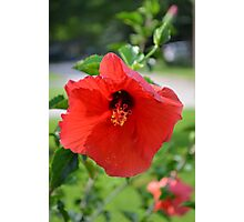 Red Gypsy Photographic Print