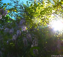 Wisteria promises by MarianBendeth