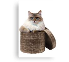 The Cat in the Basket Canvas Print