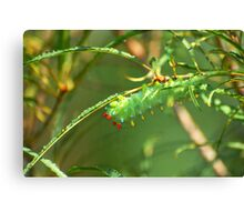 Promethea Caterpillar Canvas Print