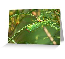 Promethea Caterpillar Greeting Card