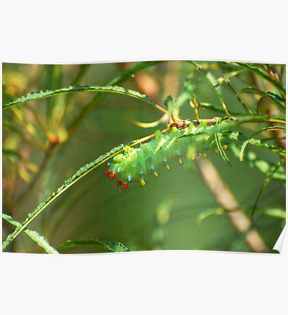 Promethea Caterpillar Poster