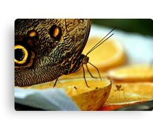 Giant Butterfly And Other Diners In Armenia Canvas Print