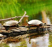 Turtles by xonear