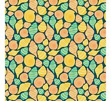 Colorful shells Photographic Print