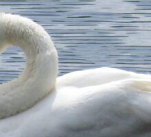 Sleepy swan Sticker