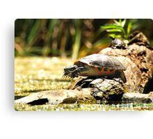 Cute Big Turtle Canvas Print