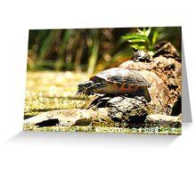 Cute Big Turtle Greeting Card
