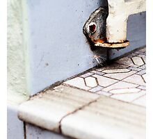 { Corners: where the walls meet #10 } Photographic Print