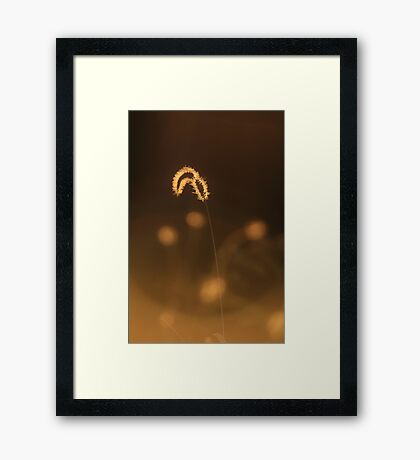 Grass of Light - Nature Background Framed Print