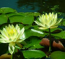 Water Lily by Christine  Patch Vogts