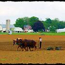 Amish Farmer by Littlehalfwings