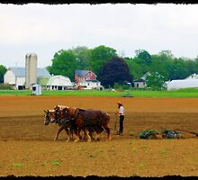 Amish Farmer by Littlehalfwings