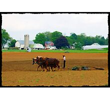 Amish Farmer Photographic Print