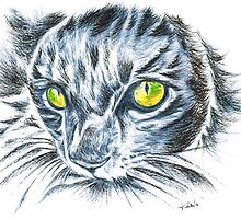 Toby green eyed cat by Teresa White