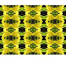 Moraea elegans Photographic Print