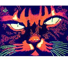 Psycho cat Photographic Print