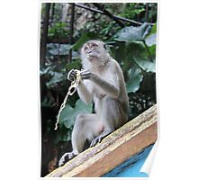 wild monkey in Kuala Lumpur Poster
