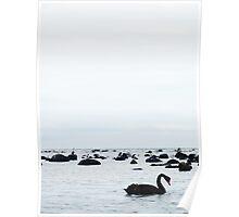 Swan sea Poster