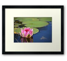 Water Lily (Pink) Framed Print