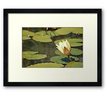 Water Lily (Yellow) Framed Print