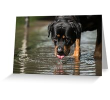 It's thirsty work being this handsome Greeting Card