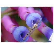 Bromeliad Flower and Gnat Poster