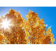 Autumn Aspens With Sun Star Photographic Print