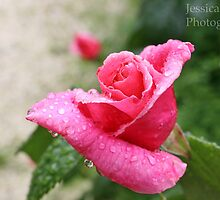 Rose & Raindrops by JessicaLouise14