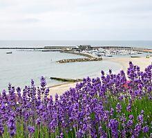 Lyme In Lavender  by Susie Peek
