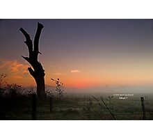 Silhouette at Dawn Photographic Print