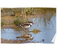 The Small Wader Poster