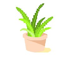 Pixelated Potted Plant Photographic Print