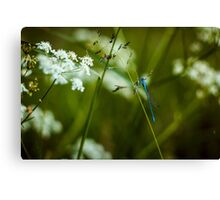 Polish Dragonfly in the Grass Canvas Print