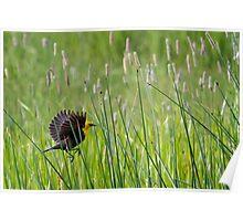 Moving Through Grass Poster