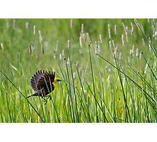 Moving Through Grass Photographic Print
