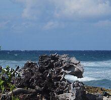 Grand Cayman Shore by Rosemary Sobiera